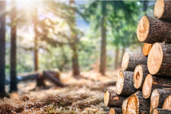 Skog där man har fällt flera träd som travats på varandra.